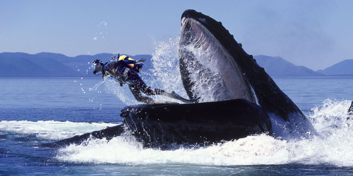 «Everything suddenly went dark.» A diver survives after being swallowed by a whale