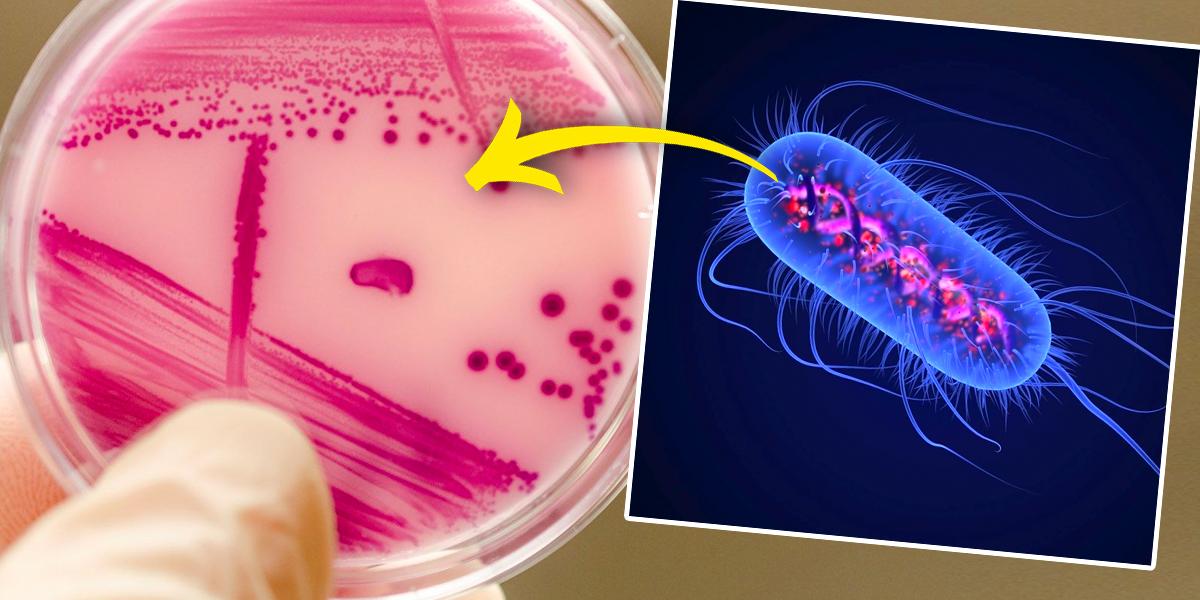 Científicos crean la primera forma de vida totalmente inmune a los virus