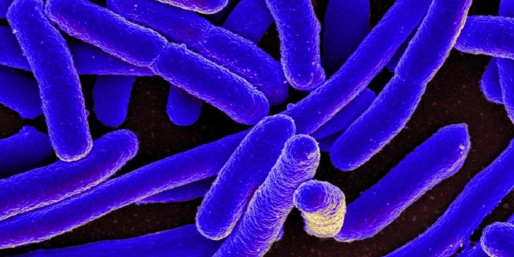 Imagen microscópica de una bacteria