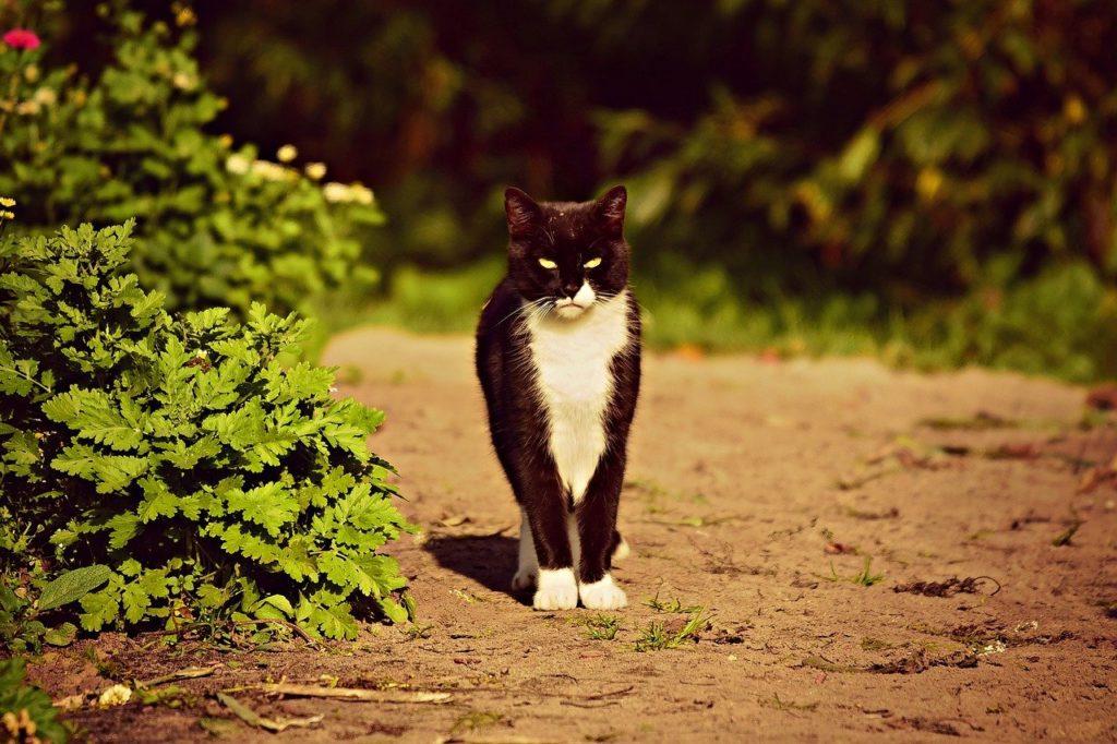 ¿Cómo sería el mundo si los gatos desaparecieran?