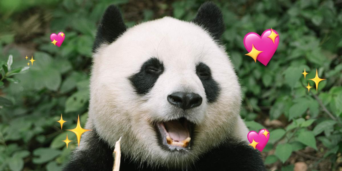 Los pandas ya no están en peligro de extinción, pero siguen siendo especie vulnerable