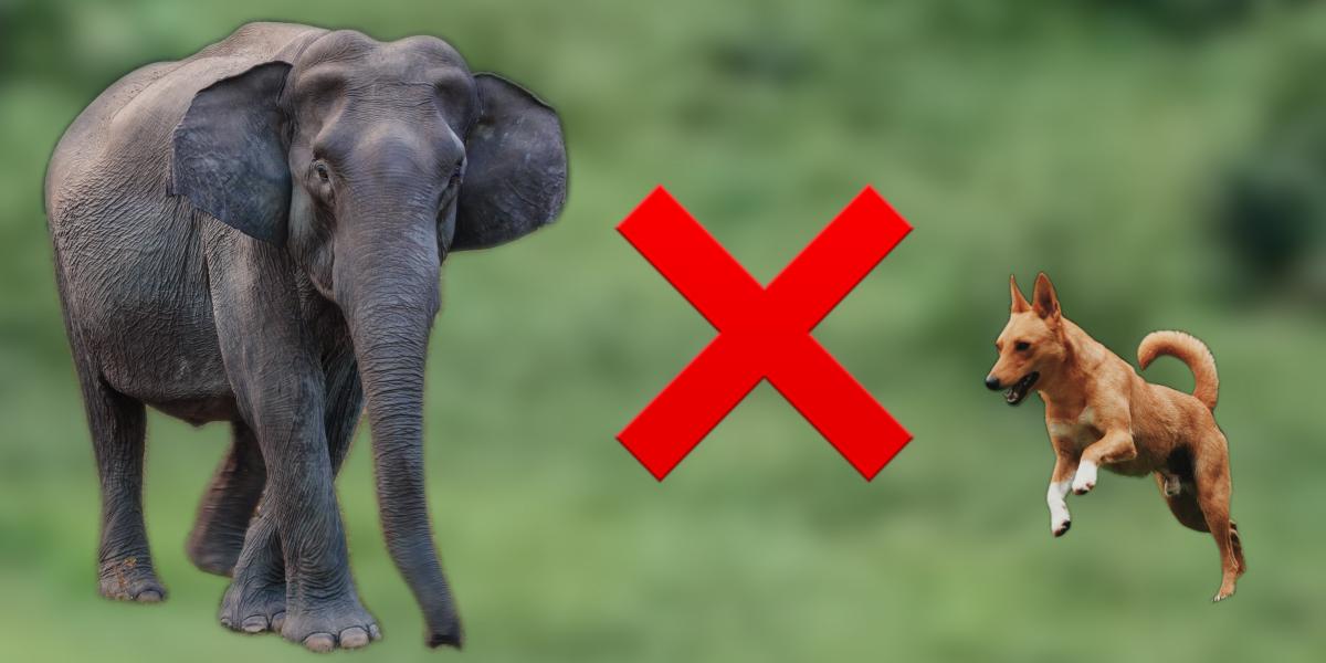 Este perrito se enfrentó a un elefante para defender a sus humanos