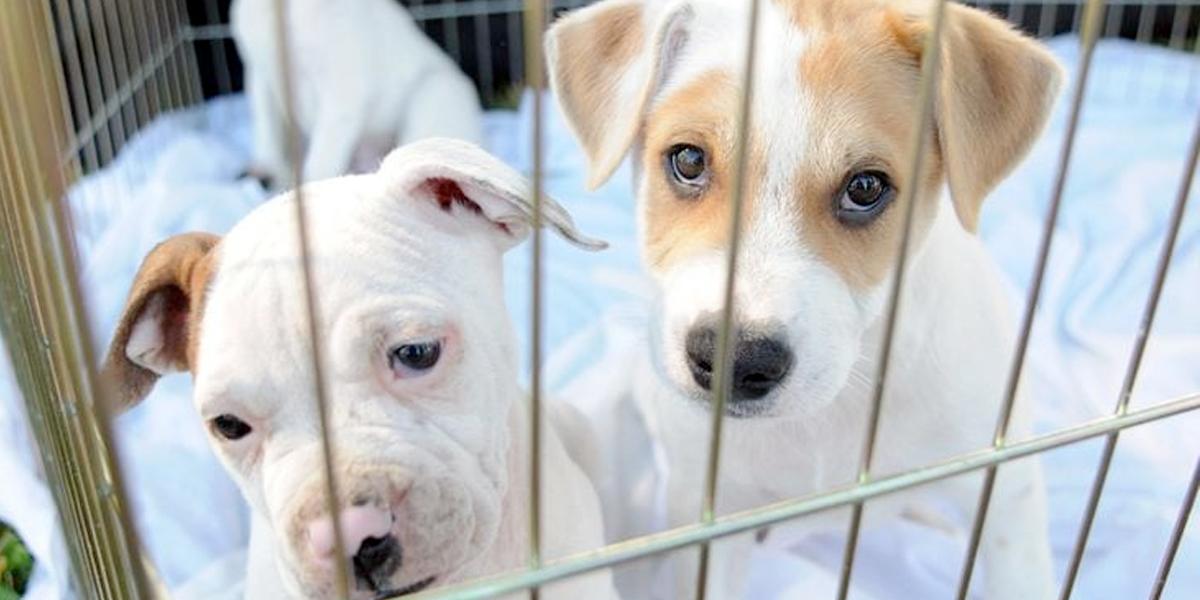 La primera ley de derechos de los animales prohibirá su venta en tiendas